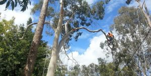 TREE LOPPING SERVICES | BTE