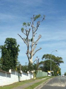 5 commonly asked questions about tree maintenance