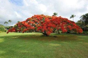 BTE adopts Poinciana as company tree!
