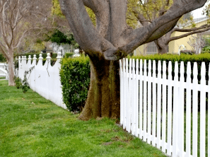 Neighbours and trimming fence lines – What you should know