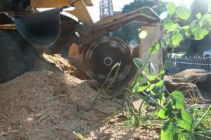 Top 3 reasons for stump grinding
