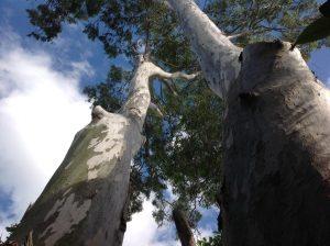 BTE tree maintenance