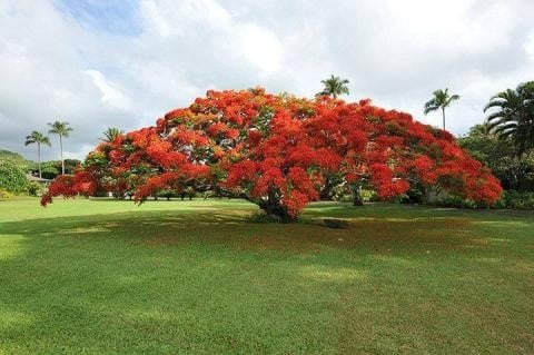 BTE adopts Poinciana as company tree!