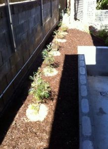 BTE gets planting!