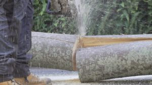 stump grinding brisbane