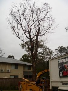 Habitat pruning in the urban environment – Part 1
