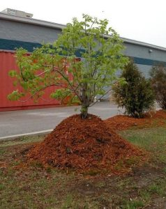 MULCH SERVICES | BTE