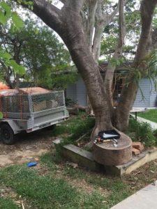 TREE HEALTH SERVICES | BTE