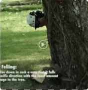 TREE STUMP GRINDING SERVICES | BTE