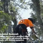 TREE STUMP GRINDING SERVICES   BTE