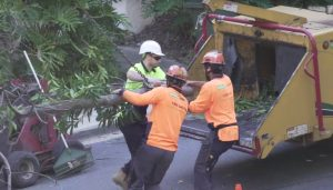 Brisbane Tree Experts 100 Tonne Crane Tree Removal Mater Hospital