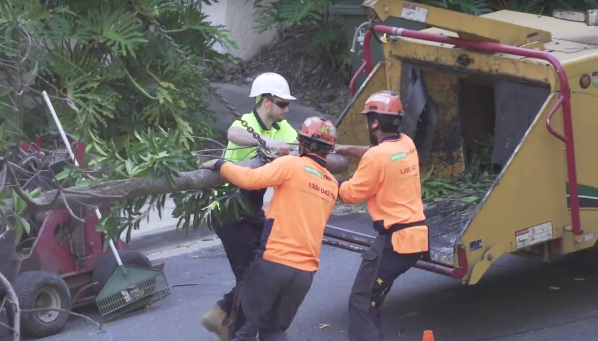 Brisbane Tree Experts 100 Tonne Crane Tree Removal Mater Hospital